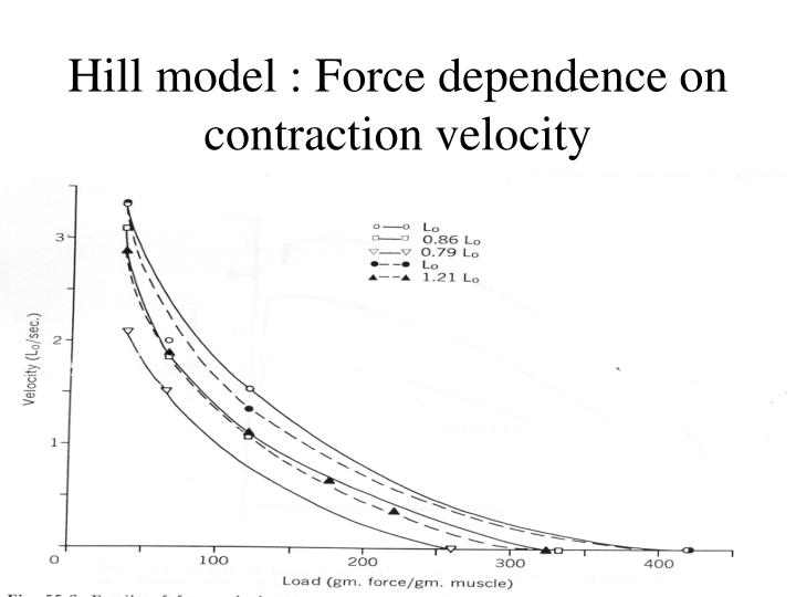 Hill model : Force dependence on contraction velocity