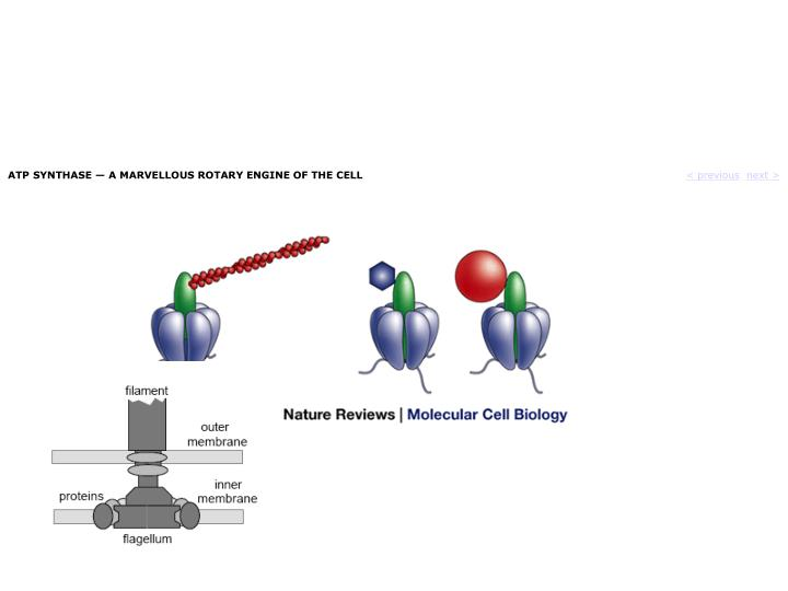 ATP SYNTHASE — A MARVELLOUS ROTARY ENGINE OF THE CELL