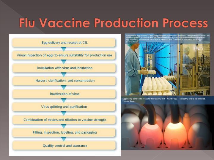 Flu Vaccine Production Process