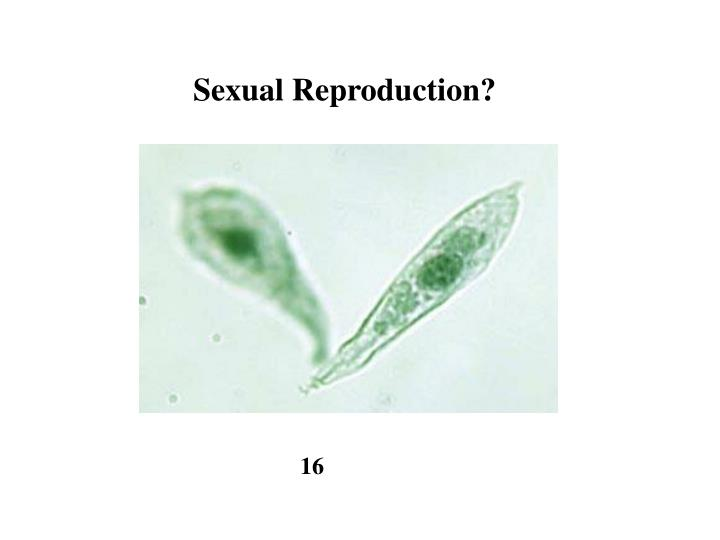 Sexual Reproduction?