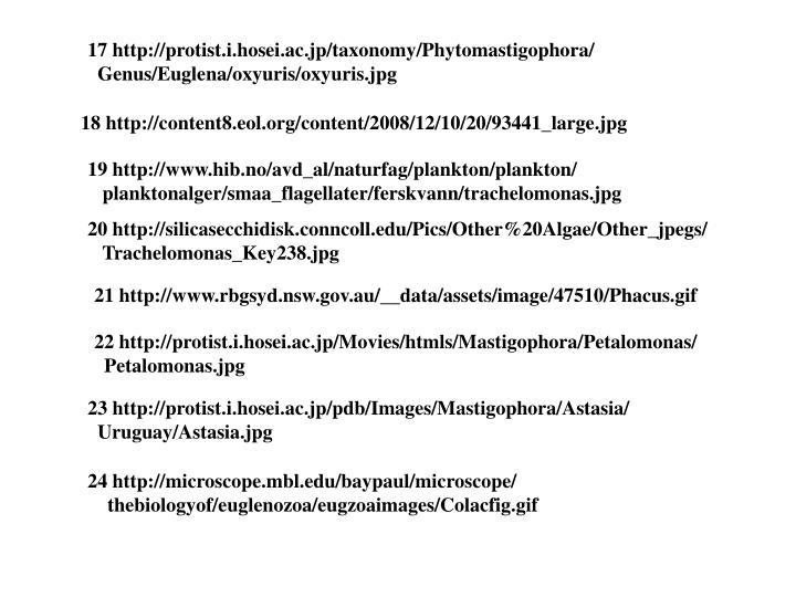 17 http://protist.i.hosei.ac.jp/taxonomy/Phytomastigophora/