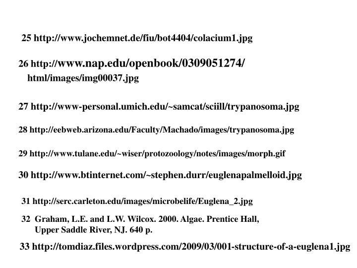 25 http://www.jochemnet.de/fiu/bot4404/colacium1.jpg