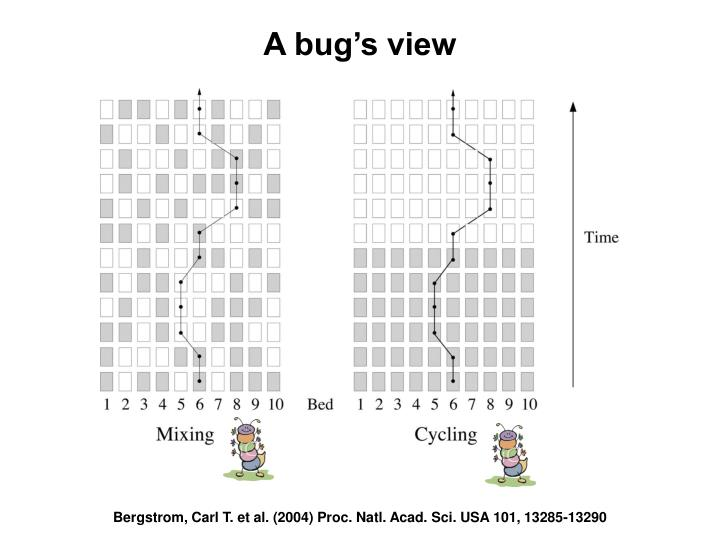 A bug's view