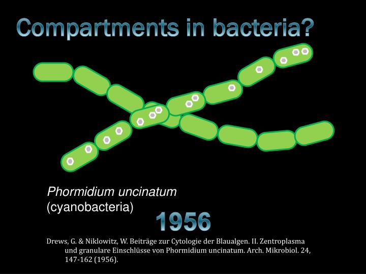 Compartments in bacteria?