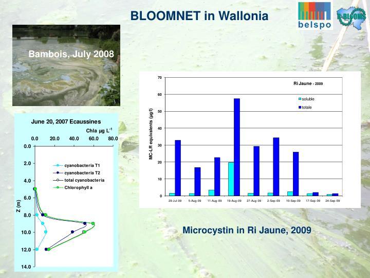 BLOOMNET in Wallonia