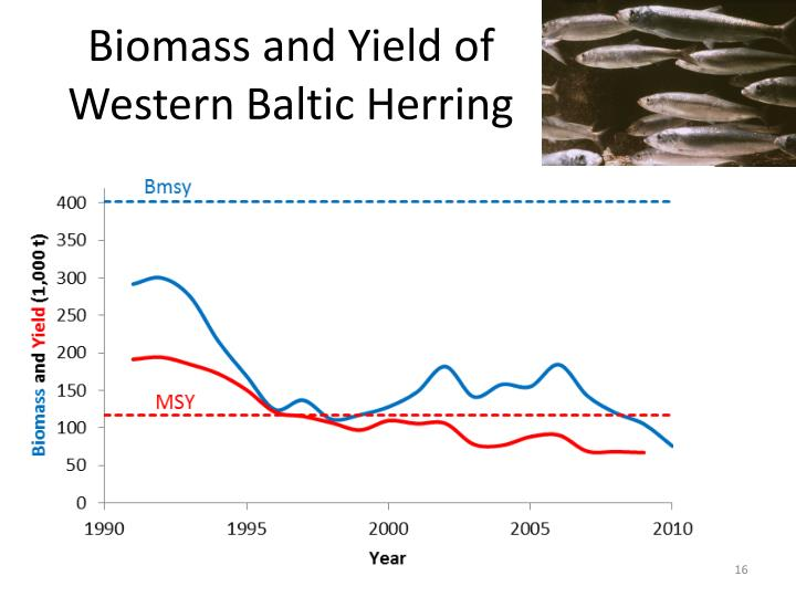 Biomass and Yield of