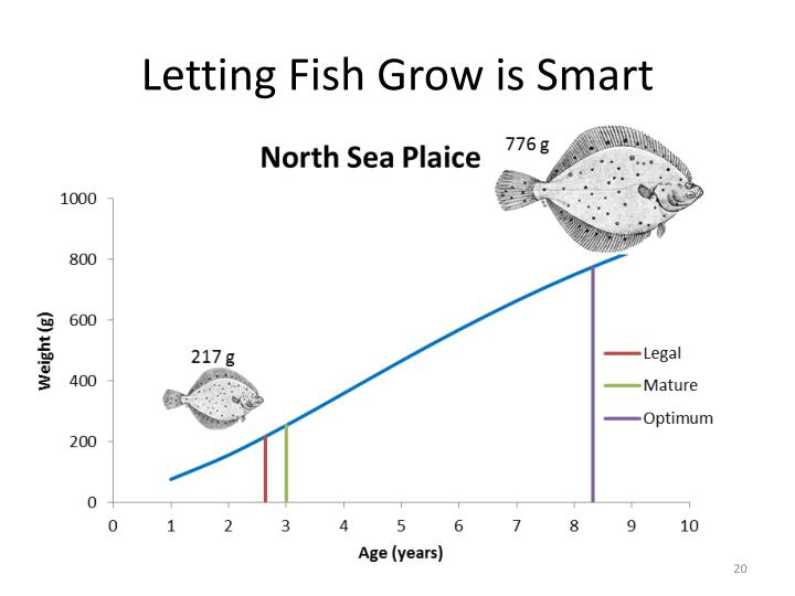 Letting Fish Grow is Smart