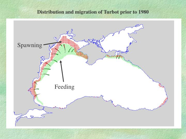 Distribution and migration of Turbot prior to 1980