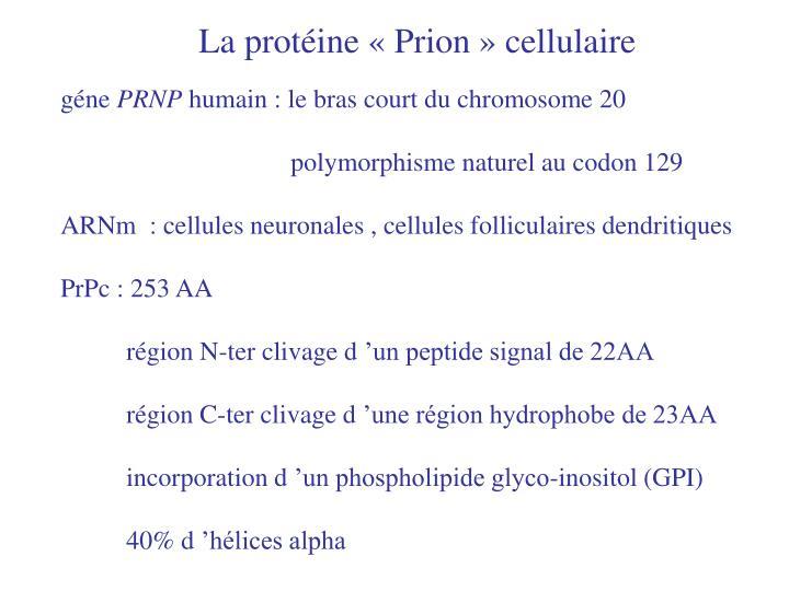 La protéine «Prion» cellulaire