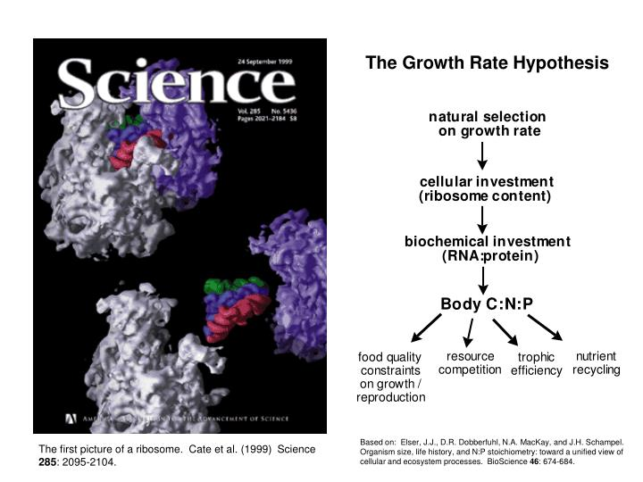 The Growth Rate Hypothesis