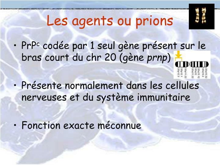 Les agents ou prions