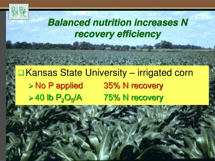 Balanced nutrition increases N recovery efficiency