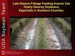 late season foliage feeding insects can totally destroy soybeans especially in southern counties