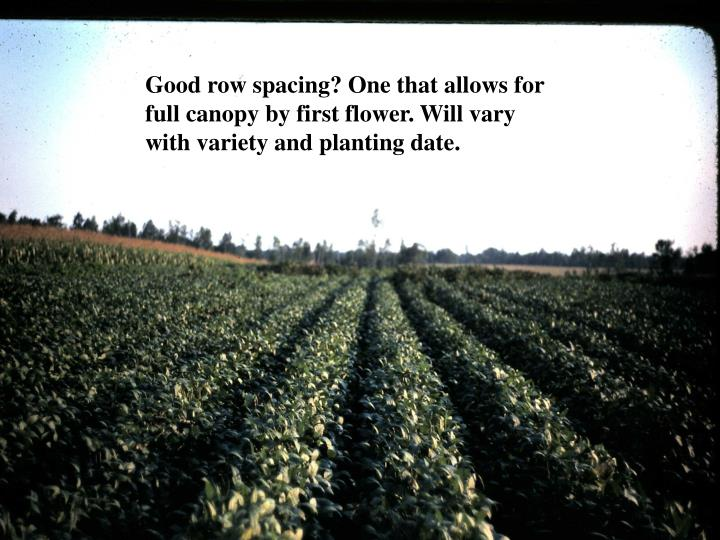 Good row spacing? One that allows for full canopy by first flower. Will vary with variety and planting date.