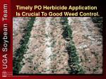 timely po herbicide application is crucial to good weed control