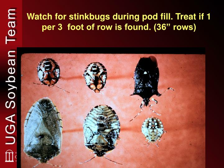 """Watch for stinkbugs during pod fill. Treat if 1 per 3  foot of row is found. (36"""" rows)"""