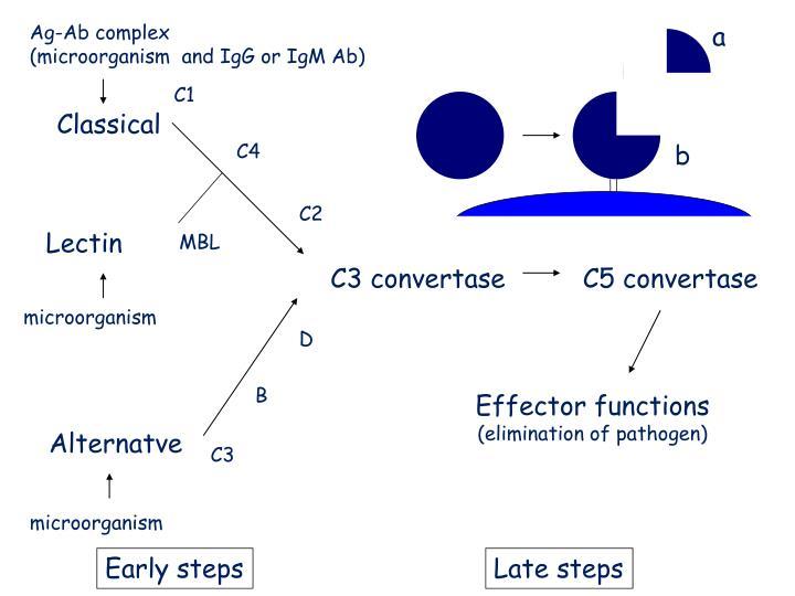 Ag-Ab complex