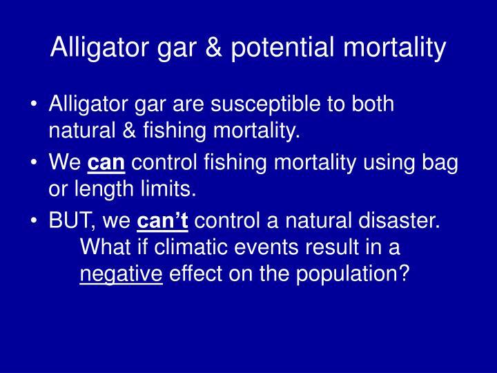 Alligator gar & potential mortality