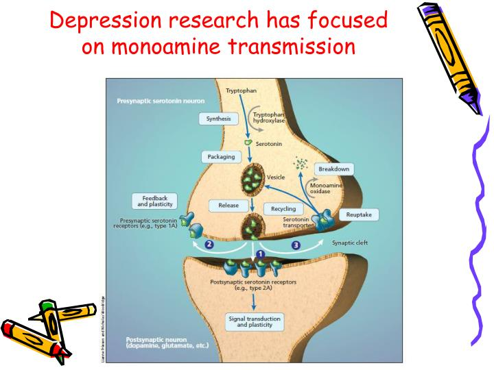 Depression research has focused on monoamine transmission