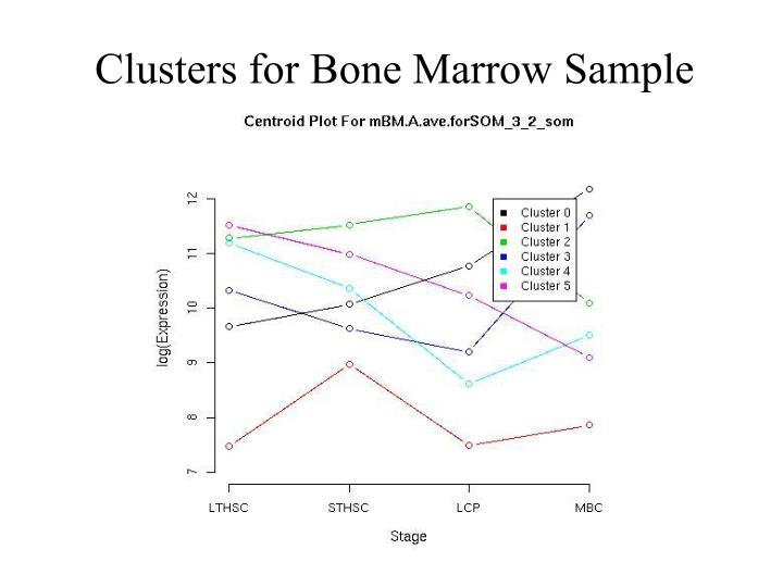 Clusters for Bone Marrow Sample