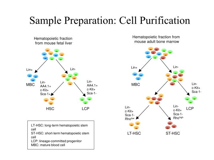 Sample Preparation: Cell Purification