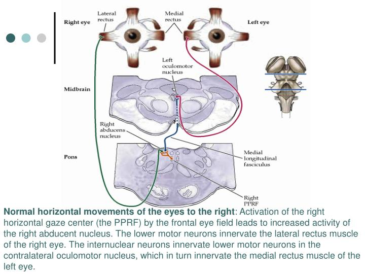 Normal horizontal movements of the eyes to the right
