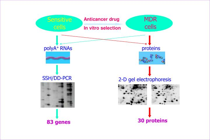 MDR cells