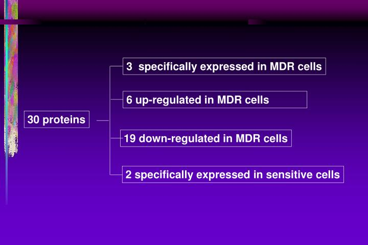 3  specifically expressed in MDR cells