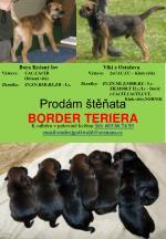 prod m t ata border teriera