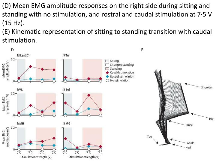 (D) Mean EMG amplitude responses on the right side during sitting and standing with no stimulation, and rostral and caudal stimulation at 7·5 V (15 Hz).