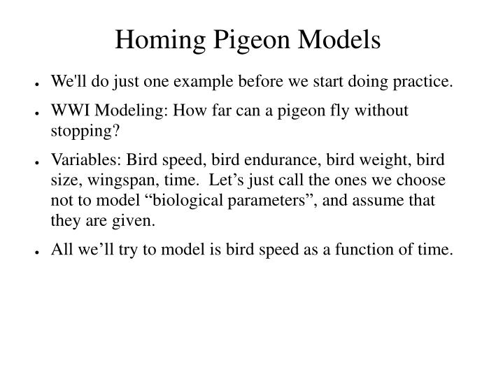 Homing Pigeon Models