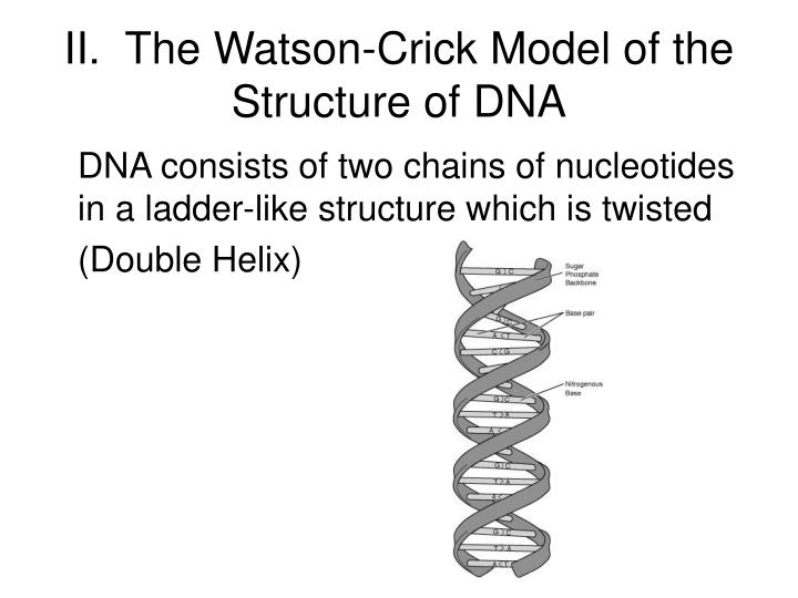 II.  The Watson-Crick Model of the Structure of DNA