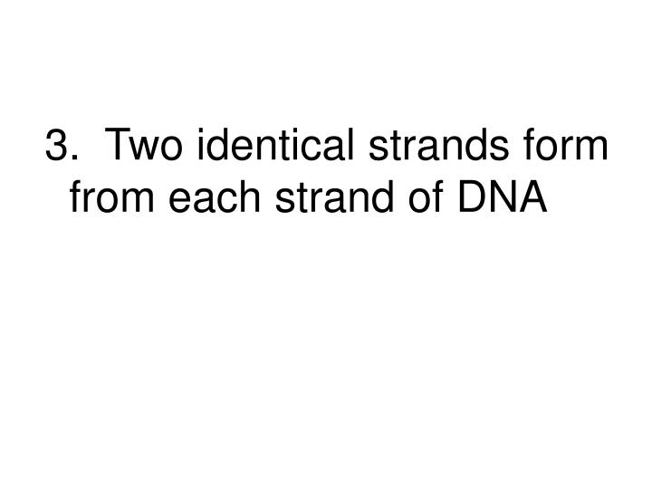3.  Two identical strands form from each strand of DNA