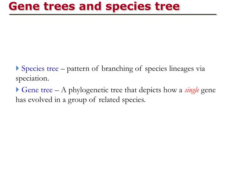 Gene trees and species tree