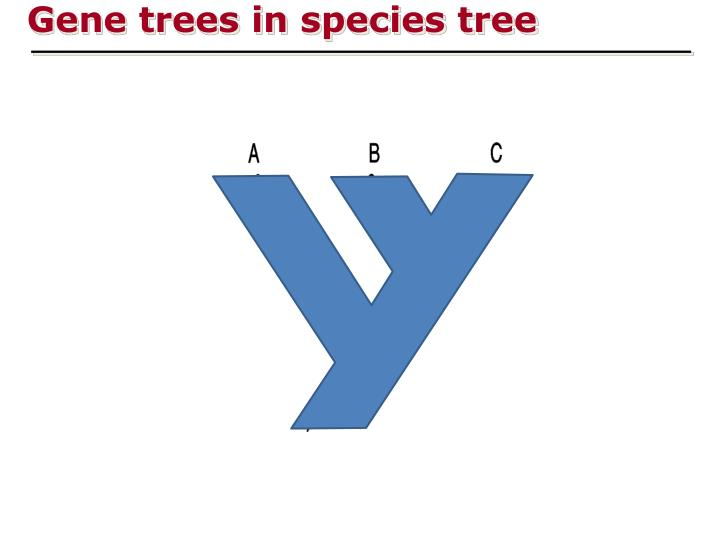 Gene trees in species tree