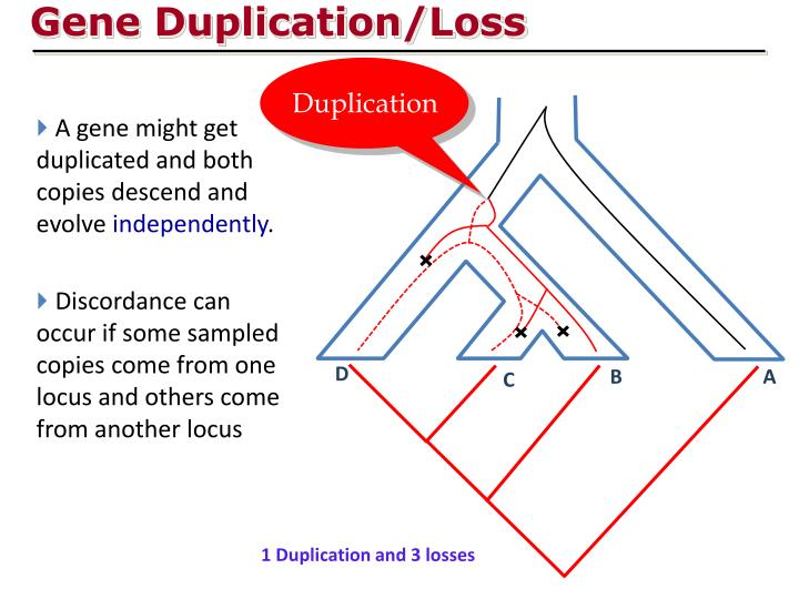 Gene Duplication/Loss