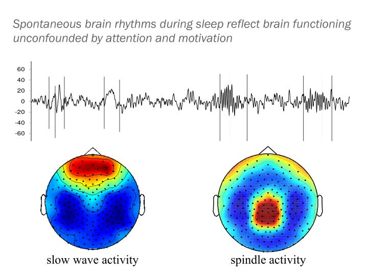 Spontaneous brain rhythms during sleep reflect brain functioning unconfounded by attention and motivation