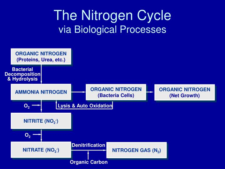 The nitrogen cycle via biological processes