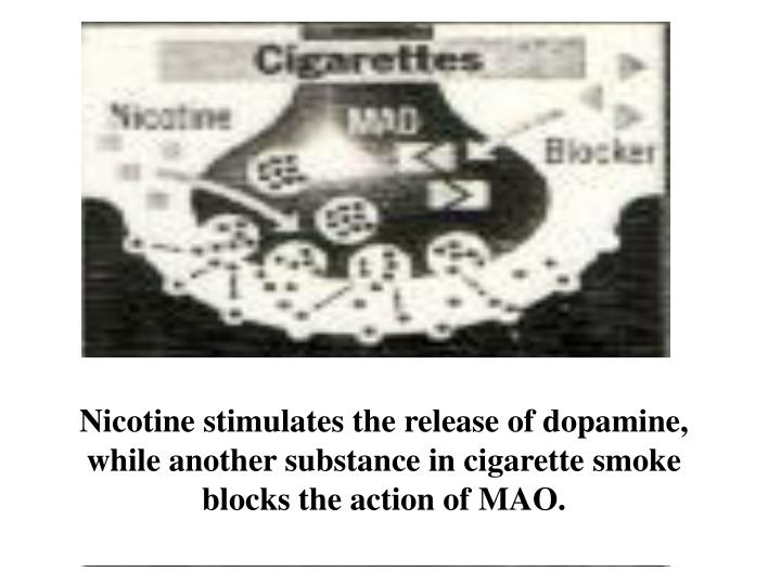Nicotine stimulates the release of dopamine, while another substance in cigarette smoke blocks the action of MAO.