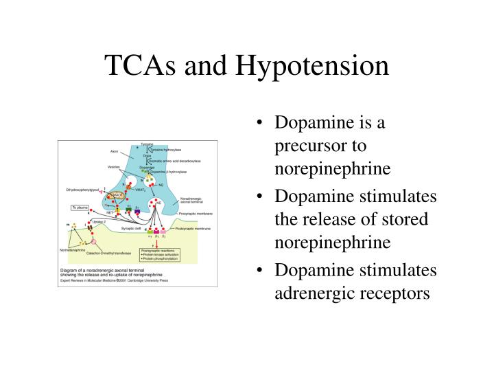 Dopamine is a precursor to norepinephrine