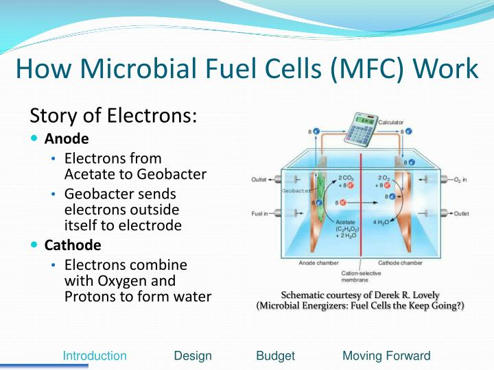How Microbial Fuel Cells (MFC) Work