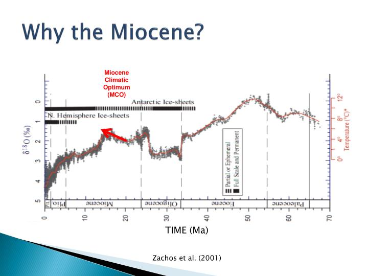 Why the Miocene?