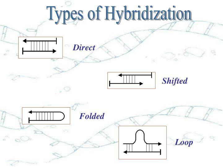 Types of Hybridization