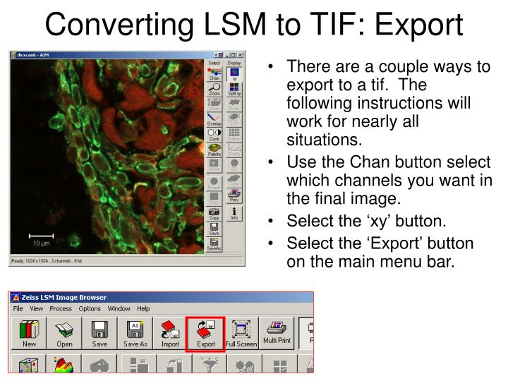 Converting LSM to TIF: Export