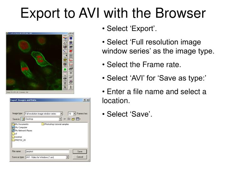 Export to AVI with the Browser