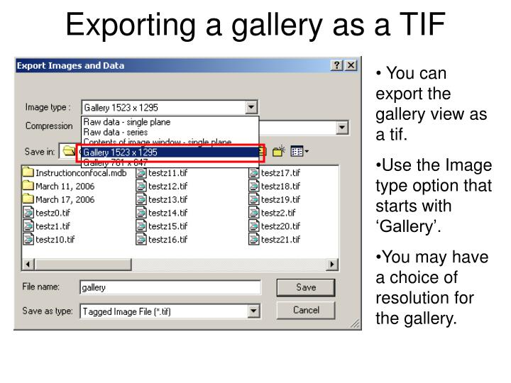 Exporting a gallery as a TIF