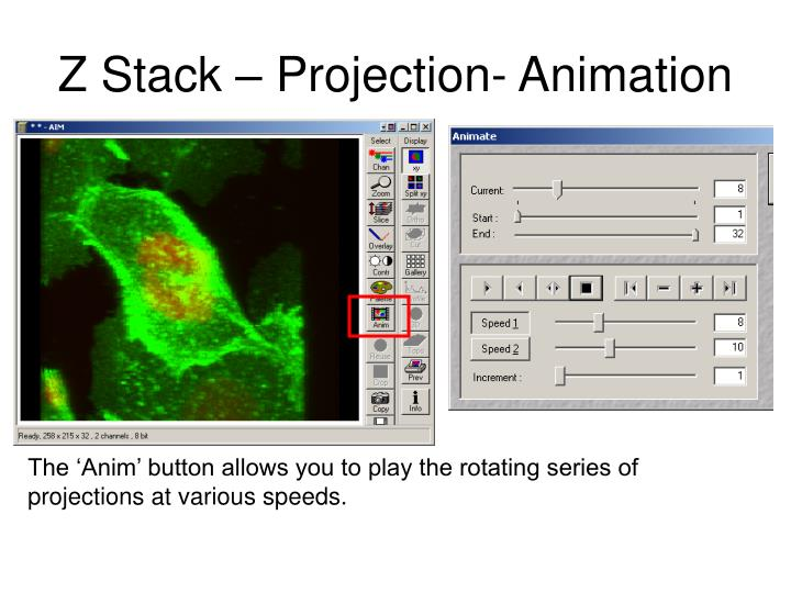 Z Stack – Projection- Animation
