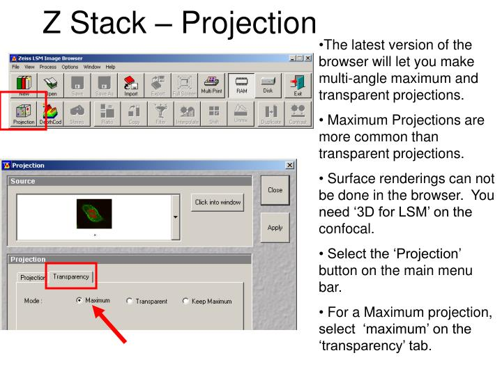 Z Stack – Projection