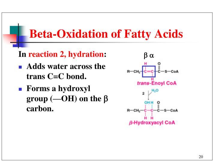 Beta-Oxidation of Fatty Acids