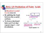 beta oxidation of fatty acids3